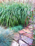 Decorative grass and stone path in the garden Stock Images