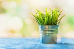 Decorative grass in a tin pot. With bokeh in a home interior Stock Photos
