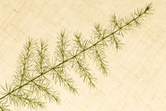 Of decorative grasses Royalty Free Stock Photos