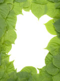 Decorative greeen leafs frame Royalty Free Stock Photos
