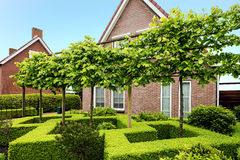 Decorative green buxus bushes Royalty Free Stock Photo