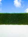 Decorative green fence on a white wall and blue sky. With clouds royalty free stock photo
