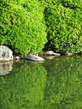 Decorative green foliage and reflection in the lak Royalty Free Stock Photos