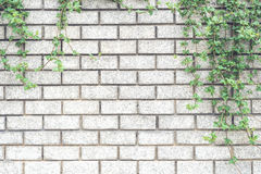 Decorative green garden on a brick wall Stock Photos