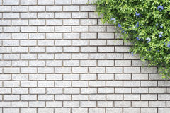 Decorative green garden on a brick wall Royalty Free Stock Image