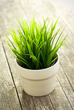 Decorative green grass in flower pot Royalty Free Stock Image