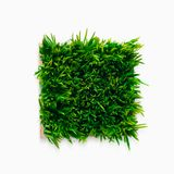 Decorative green grass in flowerpot isolated on white. Background, top view royalty free stock photo