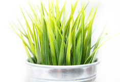 Decorative green grass in metallic pot. On white background royalty free stock image