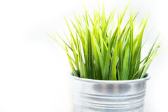 Decorative green grass in metallic pot. On white background stock images