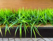 Decorative green grass stock photography