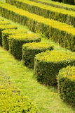 Decorative green hedges Stock Photography