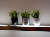 Decorative green house plants in pots Stock Photo