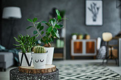 Decorative green houseplant in pot Stock Photos