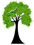 Decorative Green Tree Silhouette With Green Leaves Stock Image