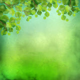 Decorative grunge green background Royalty Free Stock Image