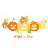 Decorative Halloween pumpkins and red cat vector design objects Royalty Free Stock Photos