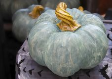 Decorative Halloween or Thanksgiving teal pumpkin with twisted stem sitting on a table with shiny bat tablecloth and other similar. Pumpkins blurred in stock photography