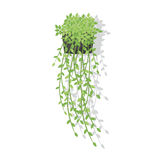 Decorative Hanging Flowerpot with Greenery. Vector Illustration royalty free illustration