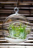 Hanging terrarium Royalty Free Stock Photography