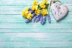 Decorative heart and fresh yellow and blue spring flowers  on tu Stock Photography