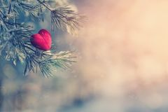 Decorative heart on snow-covered fir branch.Valentine Day card. Winter holidays. Valentines theme. instagram toning effect. retro style Royalty Free Stock Image