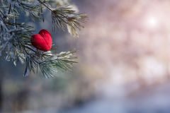 Decorative heart on snow-covered fir branch. Valentine Day card Royalty Free Stock Image