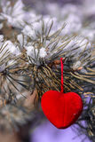Decorative heart on snow-covered fir branch.Valentine Day card. Decorative heart on snow-covered fir branch. Valentine Day card. Winter holidays. Valentines Royalty Free Stock Images