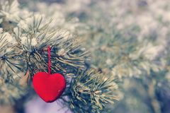 Decorative heart on snow-covered fir branch.Valentine Day card. Winter holidays. Valentines theme. instagram toning effect Stock Image