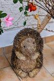 Decorative hedgehog Stock Images