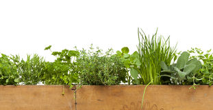 Decorative Herbs Border Royalty Free Stock Photography