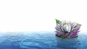 Decorative holiday background flower on the water Royalty Free Stock Images