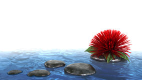 Decorative holiday background flower on the water Royalty Free Stock Photos