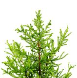 Decorative home Christmas-tree. Isolated on white background Royalty Free Stock Photos
