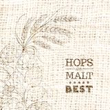 Decorative hops vector illustration border Royalty Free Stock Images