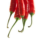 Decorative hot peppers. Chili peppers isolated on white background Stock Image