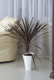 Decorative houseplant in a pot. Royalty Free Stock Photos