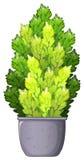A decorative houseplant Royalty Free Stock Image