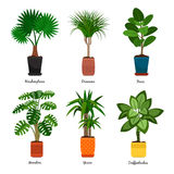 Decorative indoor palm trees in pots Royalty Free Stock Photography