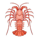 Decorative isolated crayfish Royalty Free Stock Image
