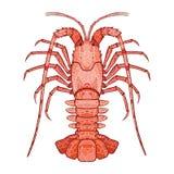 Decorative isolated crayfish Royalty Free Stock Image