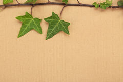 Decorative ivy on a wrapping paper Royalty Free Stock Photos