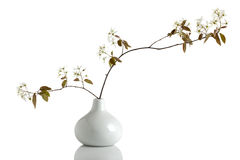 Decorative juneberry branch in a vase Stock Images