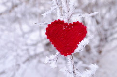 Decorative knitting heart on fir-tree branch. Winter holidays concept. Love concept background. February 14. Textile red heart on Stock Photography