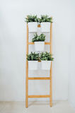 A decorative ladder plant stand to grow several plants together vertically. Plant stand with 5 plant pots, bamboo, white A decorative ladder plant stand to grow Stock Image