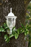 Decorative lantern. Of white color attached to a tree trunk Royalty Free Stock Image