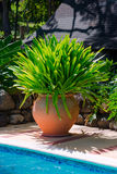 Decorative large huge terracotta pot of tropical foliage Royalty Free Stock Photography