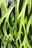 Decorative leaf Stock Photos