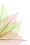 Decorative leaves Stock Images