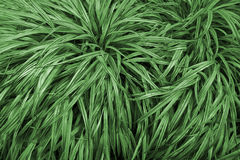 Decorative leaves of the plants Stock Photography