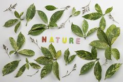 Decorative letters forming word `nature`. With green leaves and dried flowers Stock Image